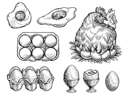 Chicken on the nest and fresh eggs, vector illustration. Farm vintage sketch.