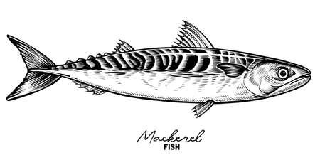 Mackerel sketch vector. Vintage hand drawn fish in engraved style. Stock Illustratie