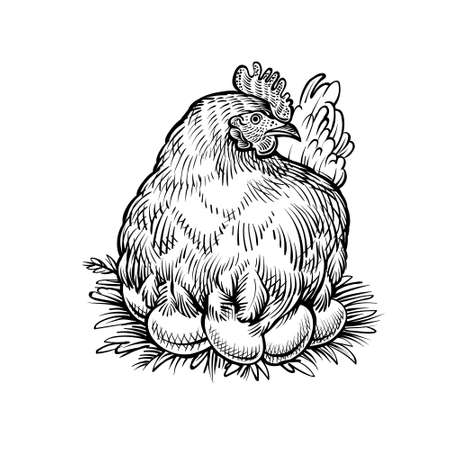 Farm hen on the nest, vector sketch. Chicken with eggs. Banque d'images - 147325236