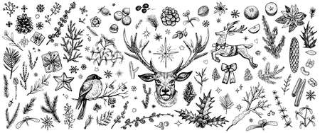 Winter forest hand drawn vector. Vintage Christmas plants. Sketched woodland evergreens clipart.