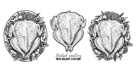 Vector carcass of chicken or turkey, hand drawn baked poultry. Engraving vintage food. Çizim
