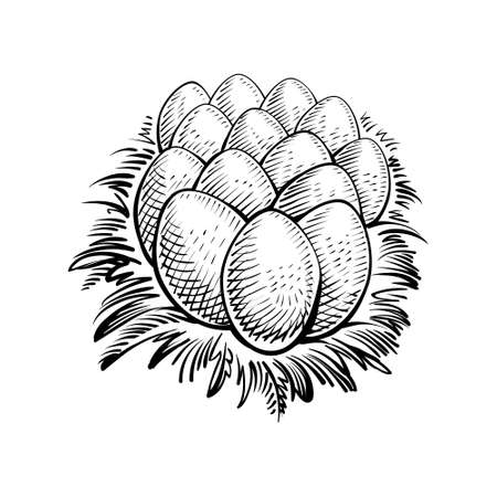 Eggs in the nest, vector illustration. Farm chicken egg, sketch in rustic engraving style.