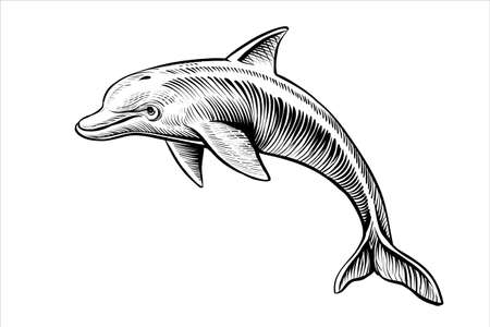 Jumping dolphin drawing, vector sketch. Black and white isolated illustration. Çizim