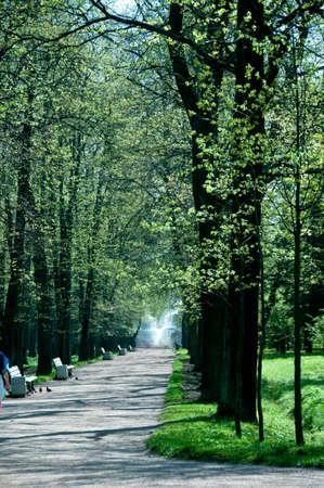 나무의 끝에 장식 분수 중 하나 피터 호프 정원 줄 지어 경로 세인트 피터 스 버그, 러시아