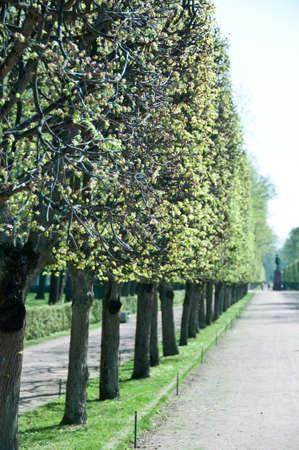 나무의 끝에 Czar 니콜라스의 동상과 피터 호프 정원 줄 지어 경로 상트 페 테르 부르크, 러시아 스톡 콘텐츠