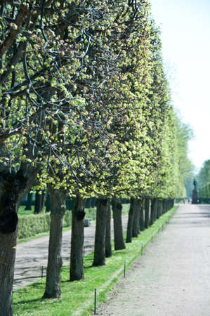 Peterhof  Gardens with the statue of Czar Nicholas at the end of a tree lined path  St  Petersburg, Russia