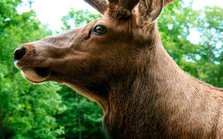 鹿の頭 写真素材