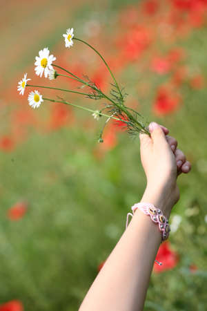 A hand offering a bouquet of flowers in a poppy field