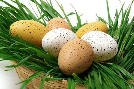 Easter eggs lying in a basket with green grass on a white background