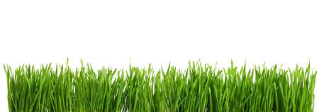 Panorama Greasy green grass cut out and isolated on white background for template and banner design