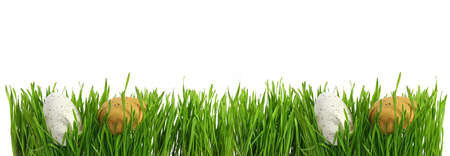 Large banner with easter eggs hidden in green grass, cut out isolated on white background for template design