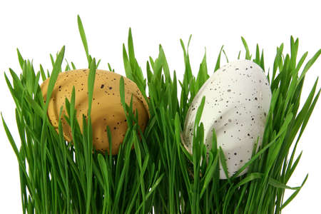 Two Easter eggs in closeup, hidden in green grass, cut out and isolated on white background