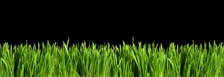 Large banner with green grass cut out and isolated on black background for template and banner design