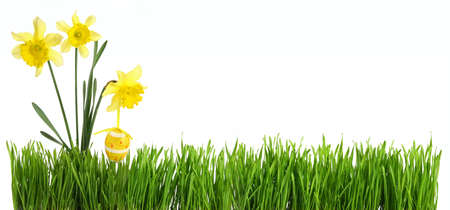 Panorama green grass with daffodil bouquet and easter egg cut out and isolated on white background for template and banner design.concept of spring season and french easter holidays Banque d'images