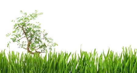 Banner with a tree in the middle of green grass, cut out and isolated on white background for template design