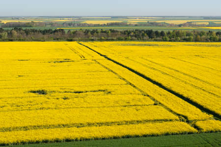 Aerial view of yellow colza fields in the Eure-et-Loir department in the Center-Val de Loire region, France. Banque d'images