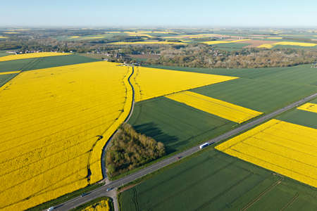 rapeseed fields seen from the sky in the fields of Beauce with the national road, town of Gué-de-Longroi, department of Eure-et-Loir in Center-Val de Loire, France.