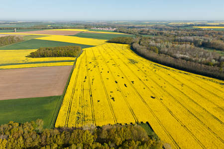 Aerial view of yellow rapeseed fields in the Eure-et-Loir department in the Center-Val de Loire region, France.