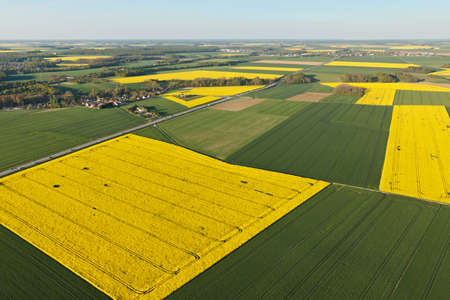 Aerial photograph of rapeseed fields in Prunay-en-Yvelines, in the south of the Yvelines department, in ÃŽle-de-France region, France. Municipality of the natural Beauce on the edge of Ablis.