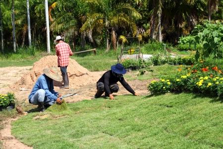 Werknemers planten van nieuwe zode gras Stockfoto