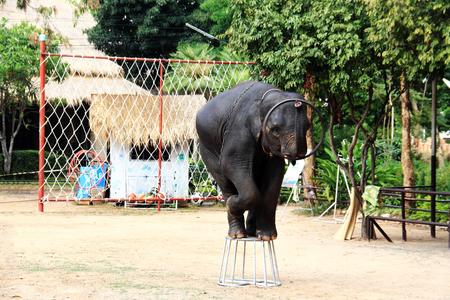 Elephant show in Thailand photo
