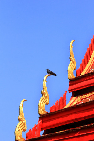 pigeon  stay on naga structure of  thai temple