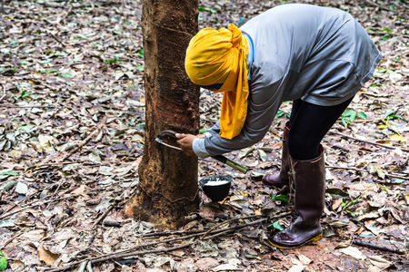 farmer rubber tapping on tree photo