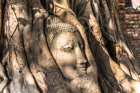 head of sandstone buddha statue in tree roots at wat mahathat, ayutthaya, thailand photo