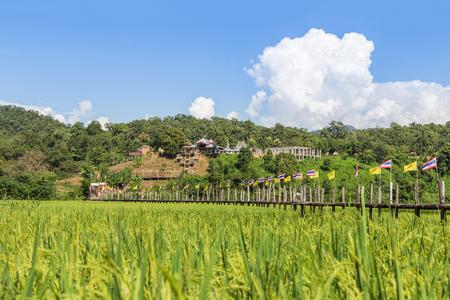 longest: Zu tong pae longest bamboo bridge in thailand