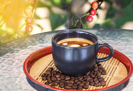 coffee tree: hot coffee cup on table with coffee tree background