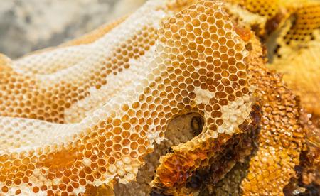 Close up natural yellow honeycomb texture selective soft focus