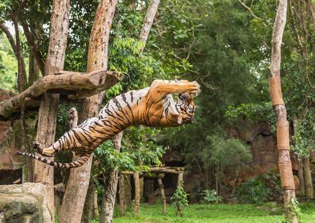 호랑이가 공중에서 음식을 뒤로 미끼로 뛰어 다니는 동작에서 배고프다.