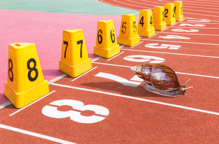 Snail ready on start running track for competition in stadium Stock Photo