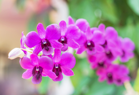 close up pink orchids tropical flowers blooming growth in garden selective focus Stock Photo