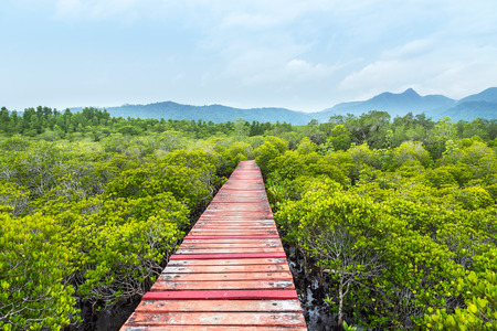 Old wooden walkway bridge in to mangroves forest on raining day Stock Photo - 111655815