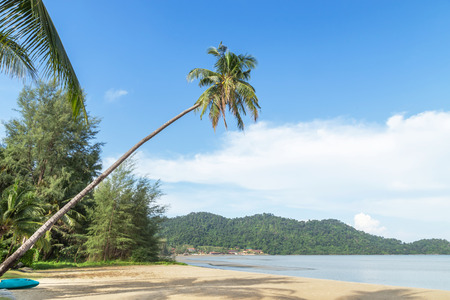 Coconut palm tree lean sloping over the tropical beach at Koh Chang island , Trat , Thailand