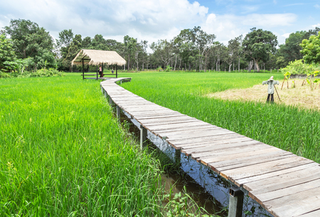 Old wooden curve walkway bridge crossing rice field to old bamboo hut with blue sky