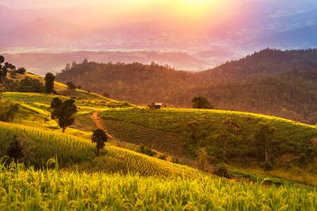 Landscape view sunset time  at  green terraced plantation  paddy rice field in Pa bong Pieng , Mae Chaem, Chiang Mai, Thailand