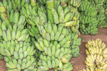 "green raw cultivated bananas or Pisang Awak Bananas or  Kluai  Namwa (Musa sapientum Linn) (Musa ABB CV.Kluai ""Namwa"") in market"