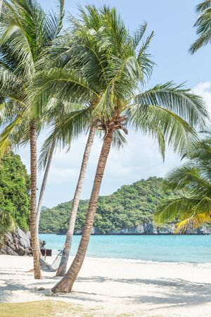Coconut palm trees at Wua Ta Lap island beach in Angthong Islands National Marine Park Surat Thani province, Thailand on sunny day summer holidays concept.