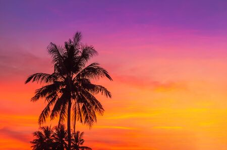 Silhouette coconut palm trees during sunset on tropical beach