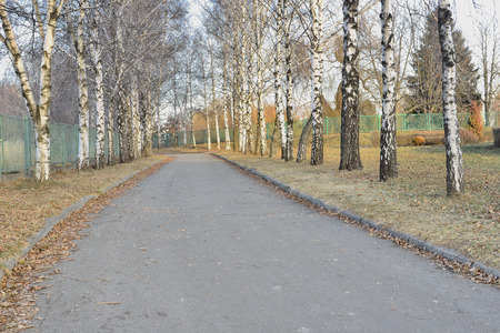 liked: Birch alley in the park. I liked the landscape lit by the rays of the sunset.
