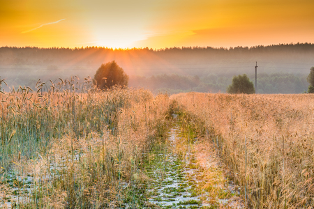 Dawn in a wheat field. Stock Photo