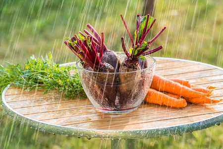 beets: Beets and carrots and summer rain.