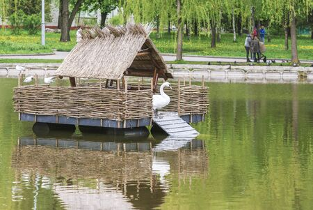 Fragment of the Swan Lake in the city of Rivne, Ukraine.