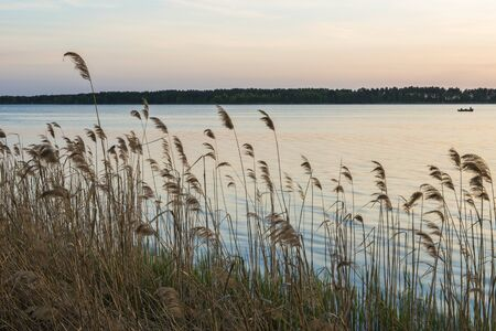 Sunset over lake with reeds and grasses in foreground Reklamní fotografie