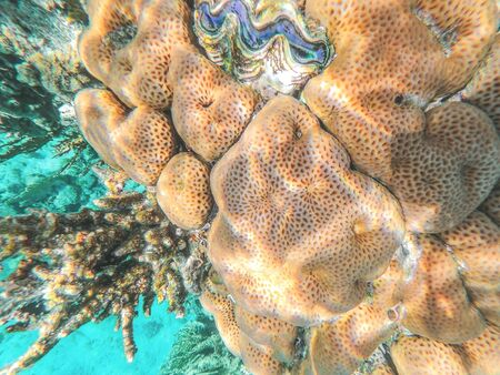 On a coral reef in the Red Sea, Egypt. Coral-brain, with its convolutions reminiscent of the convolutions of the brain. Underwater shooting.