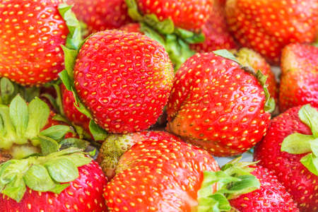 Background from freshly harvested strawberries. Strawberry - the name of plants and berries of green strawberries (lat.Fragaria viridis) and nutmeg strawberries (lat.Fragaria moschata)