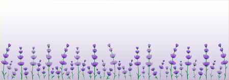 Lavender pattern on a lilac gradient background. Illustration