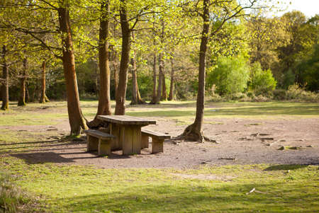 Picnic area in Abbots wood, East Sussex, England Stock Photo